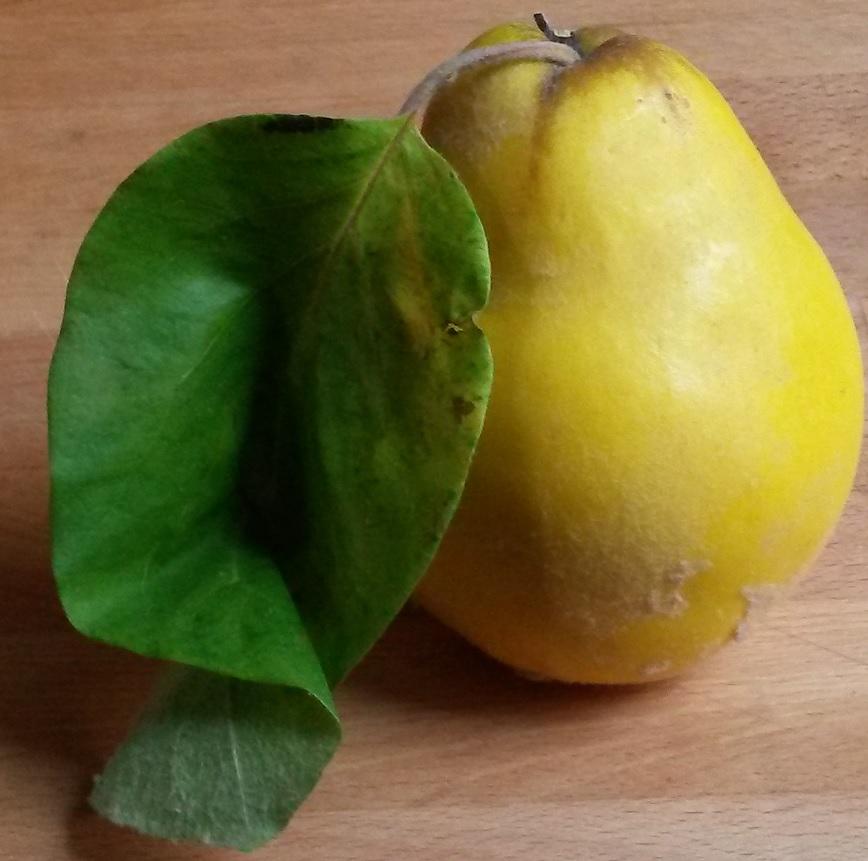 Fruktose_1