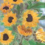 Sonnenblumen - immer ein Sinnbild für mich